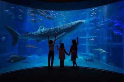 Poznaj Najważniejsze Składniki Odżywcze Obowiązujące W Rybach